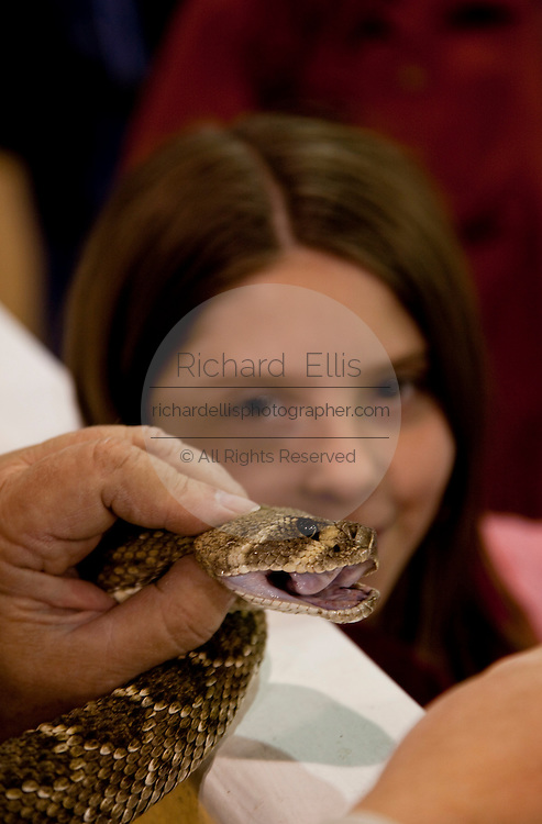 SWEETWATER, TX - MARCH 14: A young girl looks at a western diamondback rattlersnakes brought in by hunters during the 51st Annual Sweetwater Texas Rattlesnake Round-Up, March 14, 2009 in Sweetwater, Texas. Approximately 24,000 pounds of rattlesnakes will be collected, milked for venom and the meat served to support charity. (Photo by Richard Ellis)