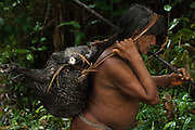 Huaorani Indian, Kempere Tega & peccary carrying home a White-lipped peccary that he hunted with his lance. The lances are made from a palm trunk.<br /> Bameno Community. Yasuni National Park.<br /> Amazon rainforest, ECUADOR.  South America<br /> This Indian tribe were basically uncontacted until 1956 when missionaries from the Summer Institute of Linguistics made contact with them. However there are still some groups from the tribe that remain uncontacted.  They are known as the Tagaeri & Taromenane. Traditionally these Indians were very hostile and killed many people who tried to enter into their territory. Their territory is in the Yasuni National Park which is now also being exploited for oil.