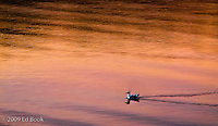 A seagull swims through an abstract reflection of the alpenglow light sky..