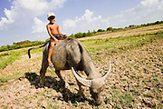 16 MARCH 2006 - KAMPONG CHAM, KAMPONG CHAM, CAMBODIA: A boy rides his water buffalo near the city of Kampong Cham on the Mekong River in central Cambodia.  Photo by Jack Kurtz / ZUMA Press
