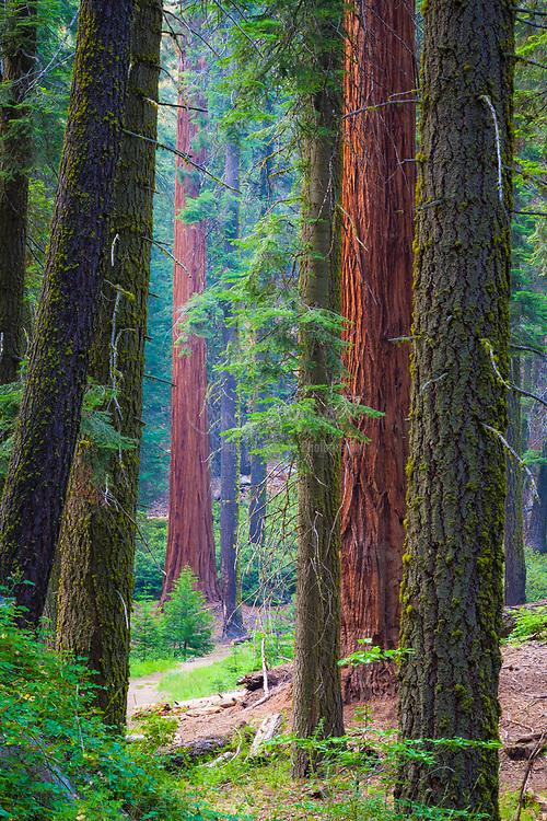 Sequoia National Park, California.