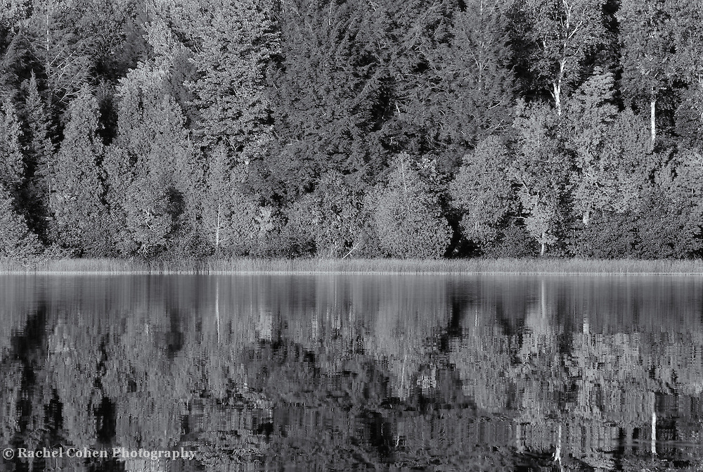 """""""Brevort Lake in Reflection"""" mono<br /> <br /> Beautiful mirrored reflections of the forest around Brevort Lake in Michigan's Upper Peninsula done in black and white!!"""