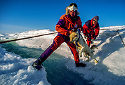 Expedition members throw husky across melt stream , harness attached to line, during descent from Greenland icecap.