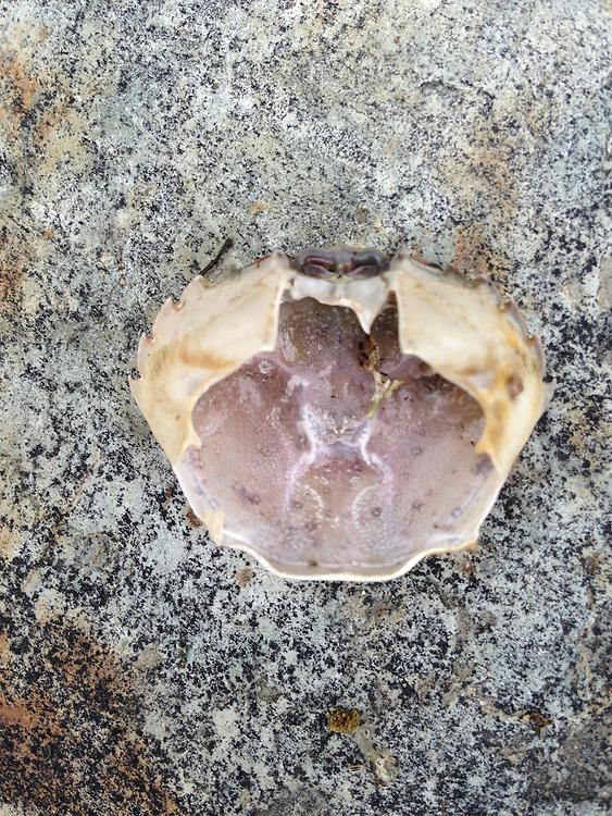 Crab Shell,