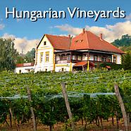 Hungarian Vineyard | Pictures Photos Images & Fotos