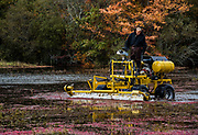 Agitation of a flooded cranberry bog, Harwhich, Cape Cod, MA