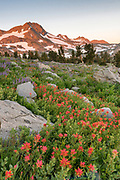 Dawn Light on Mountain with Paintbrush among boulders, Mokelumne Wilderness, Eldorado National Forest, California