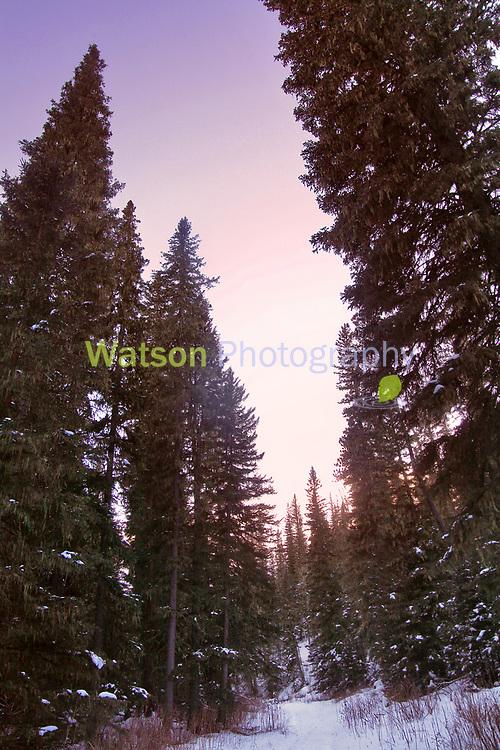Woods in Winter Twilight