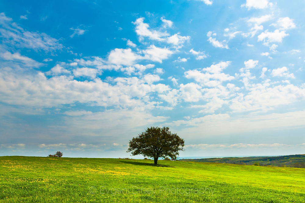 A tree in the center of the meadow