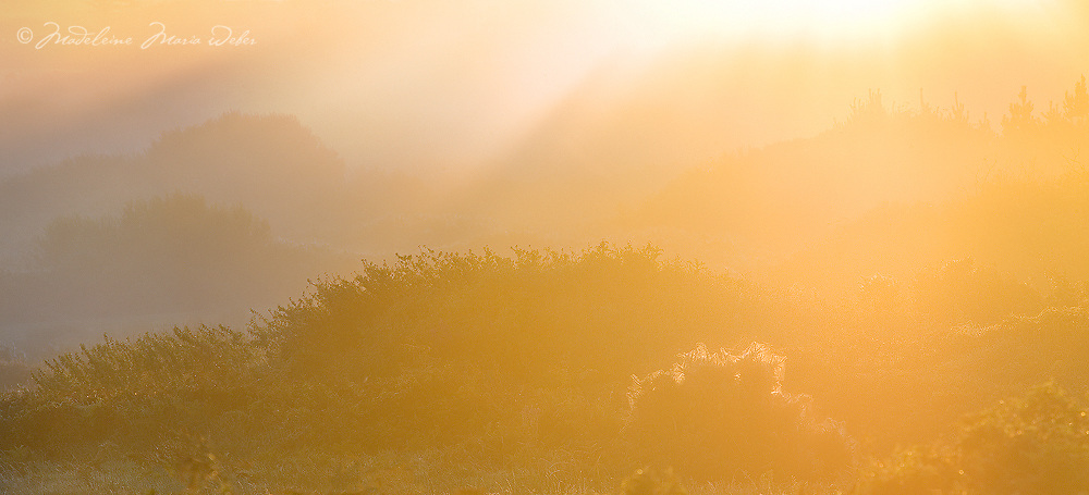 Misty Sunrise, County Kerry, Ireland / vl104