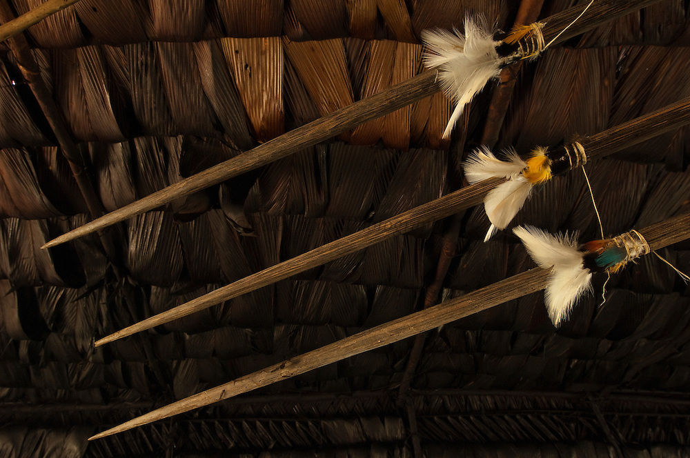 Huaorani lances decorated with feathers. Gabaro Community. Yasuni National Park. Amazon rainforest, ECUADOR.  South America<br /> These are used to spear people as well us for hunting.<br /> This Indian tribe were basically uncontacted until 1956 when missionaries from the Summer Institute of Linguistics made contact with them. However there are still some groups from the tribe that remain uncontacted.  They are known as the Tagaeri. Traditionally these Indians were very hostile and killed many people who tried to enter into their territory. Their territory is in the Yasuni National Park which is now also being exploited for oil.