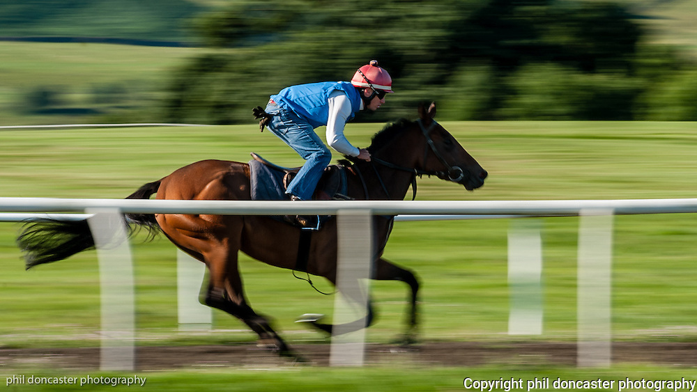 Middleham racehorse gallops at full speed