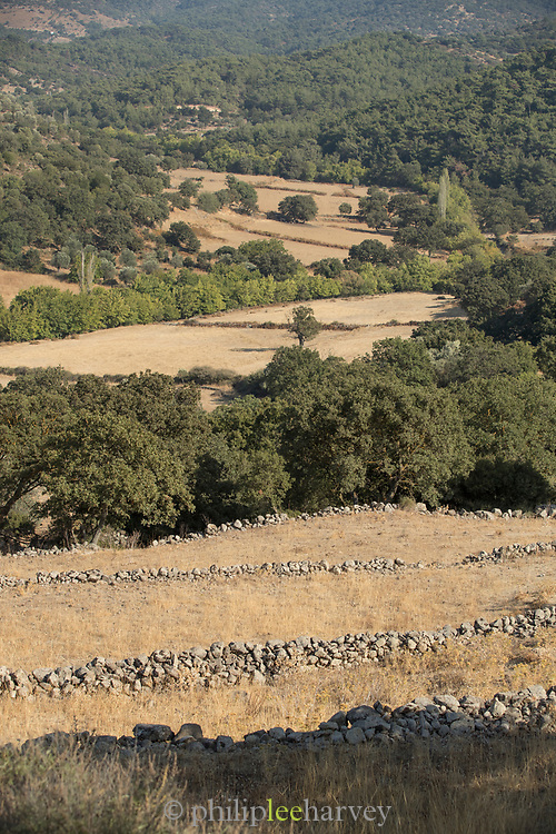 Rural landscape with stone walls on sunny summer day, Lesbos, Greece