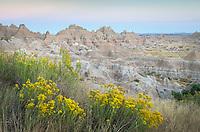 Rabbitbrush, Badlands National Park South Dakota