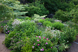 Alice's garden at Geleb Cottage with Rosa mundi - Rosa gallica 'Versicolor' - in the foreground