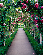 Rose Garden at Butchart Gardens near Victoria, Vancouver Island, British Columbia, Canada.
