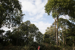 Denham Green, UK. 11th September, 2020. A site where tree felling is currently taking place for the HS2 high-speed rail link. Many thousands of trees have already been felled for the HS2 project in the Colne Valley and tree felling is currently taking place in Denham Green, Denham and Harefield.