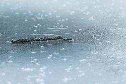 THEMENBILD - ein kleiner Ast liegt auf der zugefrorenen Eisfläche des Klammsees, aufgenommen am 06. Februar 2019 in Kaprun, Oesterreich // a small branch lies on the frozen ice surface of the Klammsee in Kaprun, Austria on 2019/02/06. EXPA Pictures © 2019, PhotoCredit: EXPA/Stefanie Oberhauser