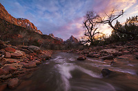 Sunset along the virgin river looking at the Watchman in Zion National Park, Utah