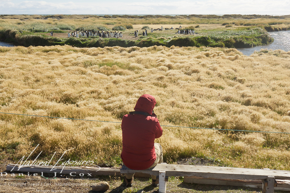 Fred Kurtz getting the shot at the King Penguin rookery in southern Chile.