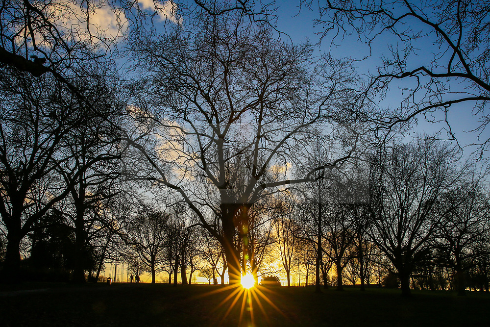 © Licensed to London News Pictures. 15/01/2020. London, UK. Silhouette of trees under clear blue skies in Finsbury Park during golden sunset following recent rainfall. Photo credit: Dinendra Haria/LNP