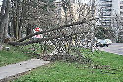 May 5, 2018 - Toronto, ONTARIO, Canada - An uprooted tree blocks a sidewalk after extreme winds of up to 110 kilometres per hour ripped through the city of Toronto, Ontario, Canada. on May 4, 2018. The wind storm destroyed homes and left tens of thousands without power across Southern Ontario. two people were killed as a result of the storm including a forestry worker after a tree fell on him. (Credit Image: © Creative Touch Imaging Ltd/NurPhoto via ZUMA Press)