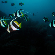 Dive Spot: Fiabacet, Whale Rock