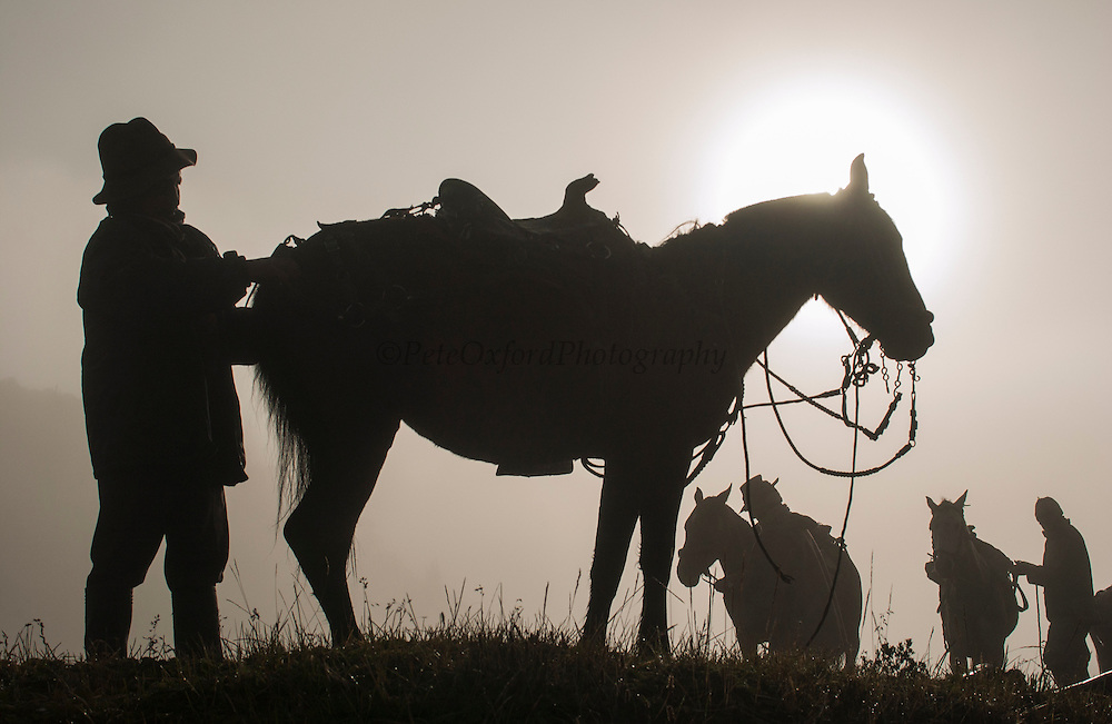 Chagras (cowboys) saddling up horses in early morning mist ready for day out in the Paramo (High Andean Grasslands) to herd cattle for annual round-up.<br /> Yanahurco Hacienda (Ranch) - largest privately owned ranch in Ecuador (25,000 hectares)<br /> base of Cotopaxi Volcano<br /> Andes<br /> ECUADOR.  South America