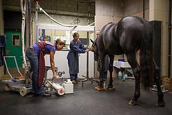 Keuring BWP hengsten 2016, 1ste phase <br /> UGent - Faculteit Dierengeneeskunde - Gent 2015<br /> © Hippo Foto - Dirk Caremans<br /> 09/10/15