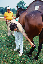Using Laser Therapy On Horse