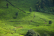 White tea terrace farming just north of Jakarta.<br /> Various scenes of the city of Jakarta in Indonesia.