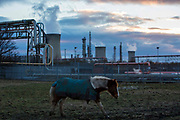 A horse grazing in front of the Frutarom Manufacturing Plant on Belasis Avenue, Billingham, Teesside, United Kingdom.