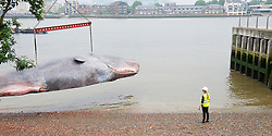 The Great Greenwich Whale<br />