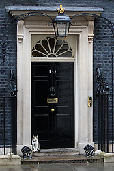 Downing Street, London, August 2nd 2016. Tensions appear to be ongoing in Downing Street as Larry the cat from No. 10 and Palmerston, newly resident at the Foreign Office continue their territorial feud. PICTURED: Larry sits in his familiar place at the door of 10 Downing Street.