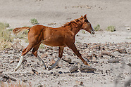 HORSES IN BADLANDS