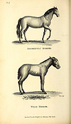 Wild and domestic horses from General zoology, or, Systematic natural history Vol II Part 2 Mammalia, by Shaw, George, 1751-1813; Stephens, James Francis, 1792-1853; Heath, Charles, 1785-1848, engraver; Griffith, Mrs., engraver; Chappelow. Copperplate Printed in London in 1801 by G. Kearsley