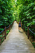 Hiker on the Rain Forest Trail, Singapore Botanic Gardens, Singapore, Republic of Singapore