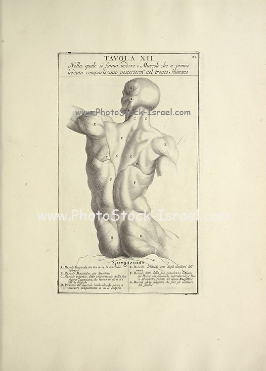 back torso woodcut print of Human Anatomy from Anatomia per uso et intelligenza del disegno printed in Rome in 1691