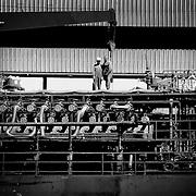 Ship workers BW, Hobart, Australia (February 2004)