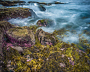 Seaweed Shoreline, Gerringong Boat Harbour, East Coast Australia.