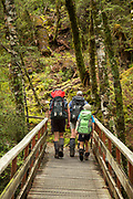 Group of backpackers hiking along a footbridge in a forest along the Routeburn Track, South Island, New Zealand