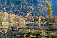 Autumn foliage at Cheam Lake Wetlands Regional Park in Popkum; British Columbia; Canada.