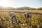 Chef Timothy Wastell and seed breeder Andrew still pick Duran Duran squash at Adaptive Seeds farm in Sweet Home, OR.