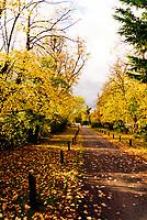 Autumn colour at the avenue stratford upon AvonPhoto by Mark Anton Smith