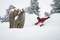 Stumping. Maxwell Morrill riding the trees, Wasatch Range, Utah.