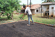 A Surui indian youth tends to the drying of his family's coffee bean crop<br /><br />An Amazonian tribal chief Almir Narayamogo, leader of 1350 Surui Indians in Rondônia, near Cacaol, Brazil, with a $100,000 bounty on his head, is fighting for the survival of his people and their forest, and using the world's modern hi-tech tools; computers, smartphones, Google Earth and digital forestry surveillance. So far their fight has been very effective, leading to a most promising and novel result. In 2013, Almir Narayamogo, led his people to be the first and unique indigenous tribe in the world to manage their own REDD+ carbon project and sell carbon credits to the industrial world. By marketing the CO2 capacity of 250 000 hectares of their virgin forest, the forty year old Surui, has ensured the preservation, as well as a future of his community. <br /><br />In 2009, the four clans and 25 Surui villages voted in favour of a total moratorium on logging and the carbon credits project. <br /><br />They still face deforestation problems, such as illegal logging, and gold mining which causes pollution of their river systems