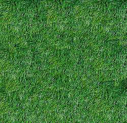 Tuft of soft grass or wheat grass carpet