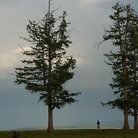 A traveler walks below larch trees beside Lake Hovsgol, in Lake Hovsgol National Park, Mongolia.