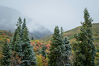 A dusting of snow covers the trees as Fall colors shine through the storm.