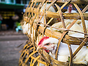 17 JUNE 2013 - YANGON, MYANMAR: Chickens for sale in a market in Yangon. Yangon, formerly Rangoon, is the largest city in Myanmar. It is the former capital of the Southeast Asian country. It's still Myanmar's economic capital.    PHOTO BY JACK KURTZ